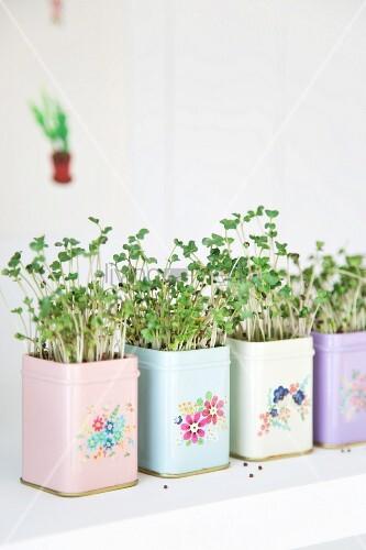Mit Kresse bepflanzte, pastellfarbene Blechdosen romantisch mit Blumenmuster bemalt