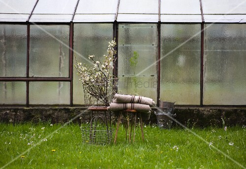 Branches of blossom in wire basket and rustic woollen blankets on stools on green spring lawn in front of greenhouse