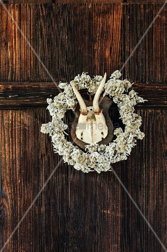 Hunting trophy in centre of floral wreath on wooden wall