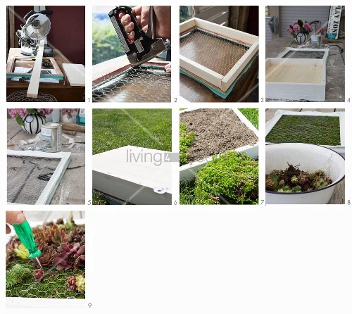 Instructions for planting succulents in picture frame