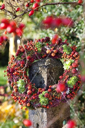 Autumnal wreath of rose hips, blackberries, heather and houseleeks on garden fence