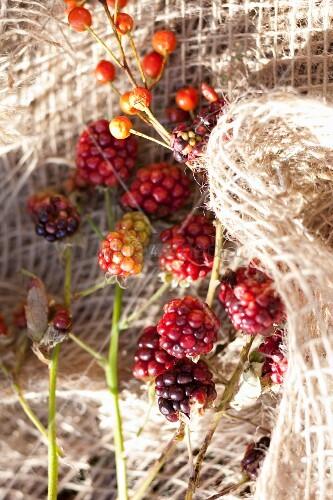 Rose hips nd blackberries on rough burlap