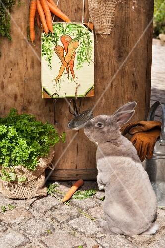 Rabbit next to hand-made key panel with carrot motif on wooden door in garden