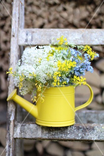 Wild flowers in yellow watering can stood on ladder