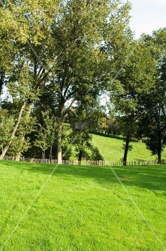 Grüne Sommerlandschaft mit Wiesen und Bäumen