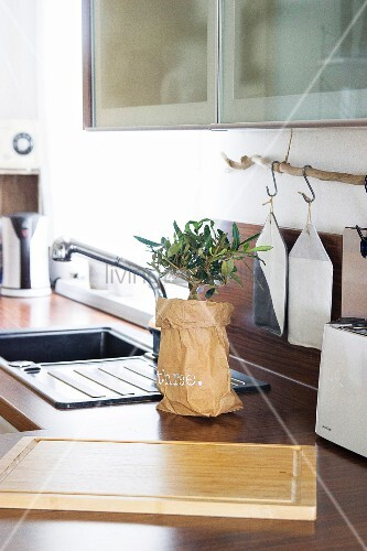 Small tree in decorative paper bag on kitchen counter