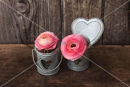 Ranunculus in small zinc buckets and love-heart against dark wood