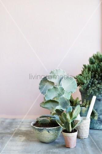 Arrangement of succulents in ceramic pots