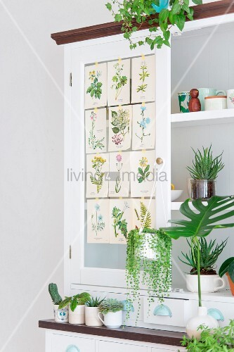 Weißes Küchenbuffet mit verschiedenen Grünpflanzen und Pflanzen-Illustrationen dekoriert