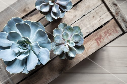 Succulents on top of old wooden crate