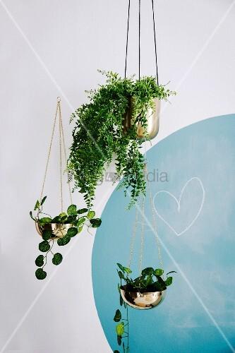 Blumenampeln mit Hängepflanzen vor einer Wand mit blauem Kreis