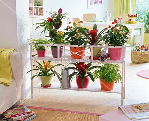 Flower bench as a room divider with Guzmania, Anthurium, Adiantum