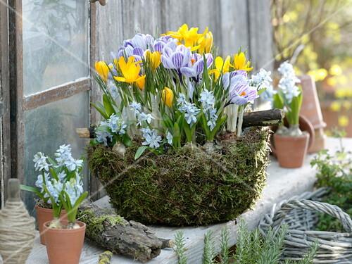 Homemade Moss Shell Buy Image 12178399 Living4media