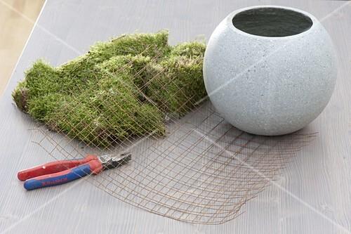 Homemade Moss Shell Buy Image 12177777 Living4media