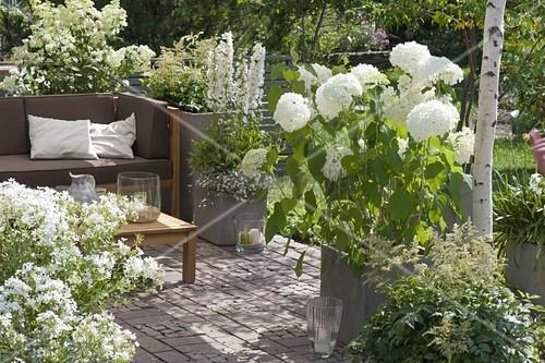 mit sonnensegel schattierte terrasse mit weissen pflanzen lounge ecke bild kaufen living4media. Black Bedroom Furniture Sets. Home Design Ideas