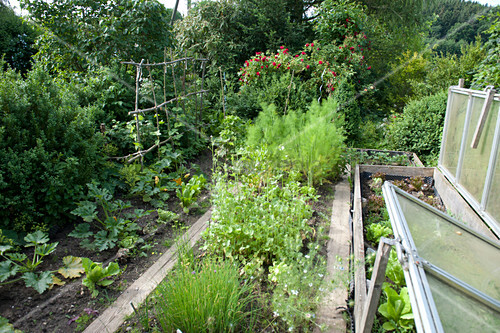 Vegetable garden with herbs and vegetables