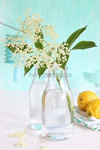 Holunderblütenzweige in Glasflaschen, daneben Zitronen