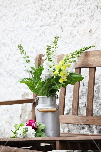 Yellow and white snapdragons in old milk churn