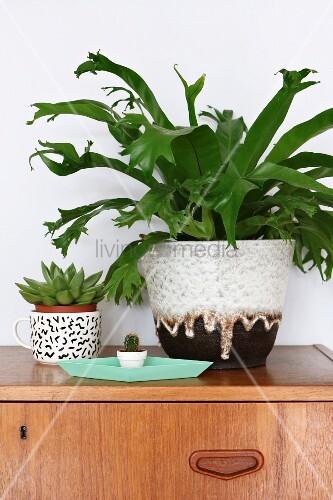 Zimmerpflanzen mit kleinem Kaktus, Sukkulente und Grünpflanze in Übertopf