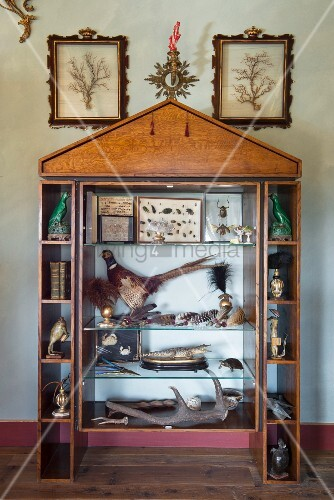 Stuffed animals, animal figurines, birds' feathers and collection of beetles in display case