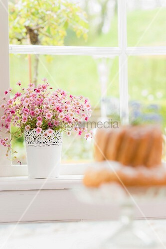 Rosa blühender Steinbrech im Topf mit Spitzenornament am Fenster