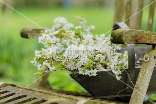 Holzkorb mit Blütenzweigen auf einem verwitterten Gartenstuhl