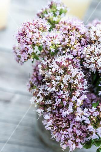 Blüten des Wilden Oregano