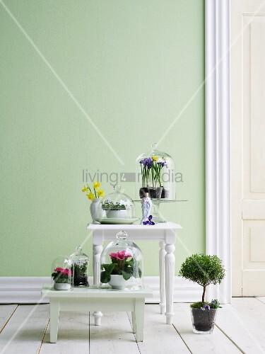 Frühlingsblumen unter Glasglocken auf weißem Schemel und Tisch