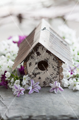 Nesting box and spring flowers