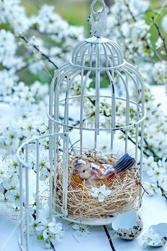 Branches of mirabelle plum blossom around bird ornament in bird cage