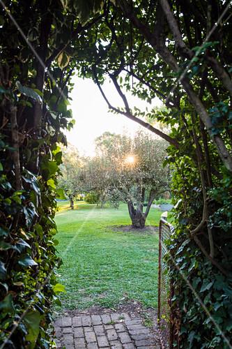 Blick durch mit Efeu beranktem Bogen auf Birnenbaum in den Garten