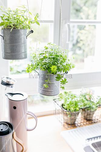 Kräuter in der Küche – Bild kaufen – 12665551 ❘ living4media