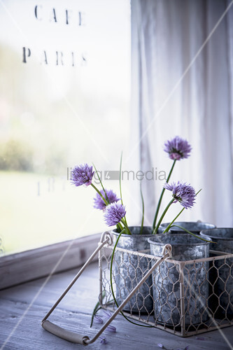 Chive blossoms in beakers in wire basket