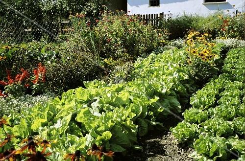 A Summer Vegetable and Flower Garden