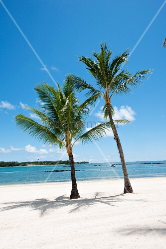 Palm trees, blue sky and idyllic white beach