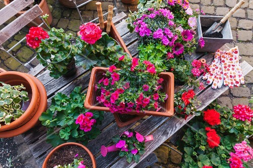 Various spring and summer flowers and gardening tools on garden table