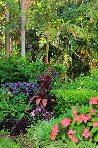 tropischer garten mit palmen und bild kaufen 12351757 living4media. Black Bedroom Furniture Sets. Home Design Ideas