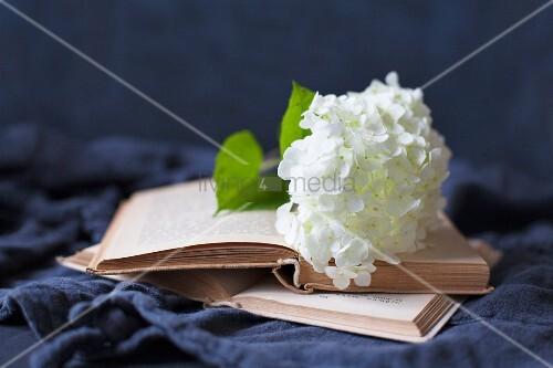 White hydrangea flower on open book