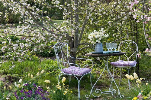 Seating place in front of Malus, with Tulipa 'Purissima' and 'Budlight' bouquet