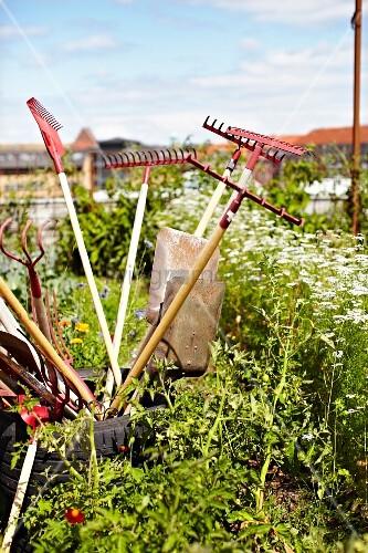 Gardening tools on roof garden of Stedsans Restaurant, Ostergro, Copenhagen, Denmark