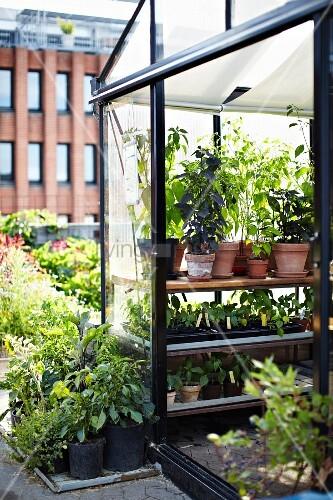 gew chshaus im dachgarten restaurant stedsans ostergro kopenhagen bild kaufen living4media. Black Bedroom Furniture Sets. Home Design Ideas