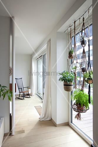 h ngende zimmerpflanzen am fenster im wohnzimmer bild kaufen living4media. Black Bedroom Furniture Sets. Home Design Ideas