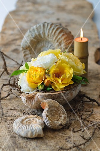 Arrangement of fossils and yellow and white roses in half a coconut shell