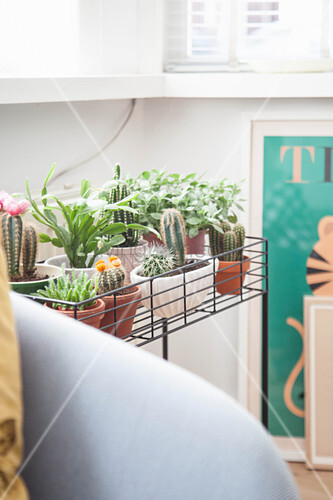 Houseplants on plant stand