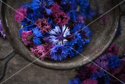 Edible cornflowers (Cyanus segetum) of various colours