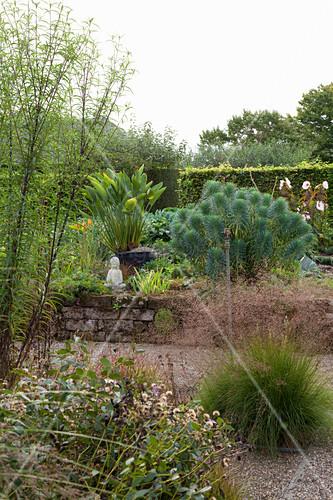 Blick auf Garten mit Wolfsmilch