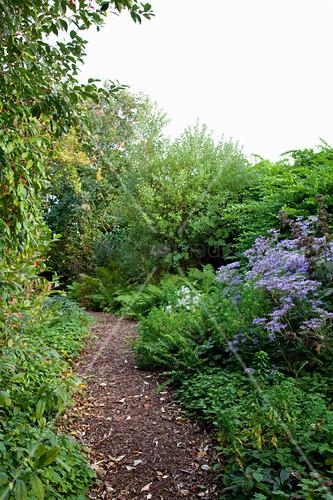 Shady herbaceous border in garden