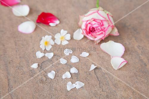 Blütenblätter auf Steinuntergrund