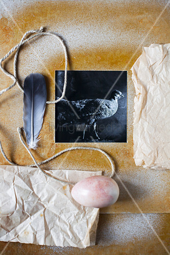 Black-and-white photo of bird in hand-made frame, wrapping paper, egg and feather