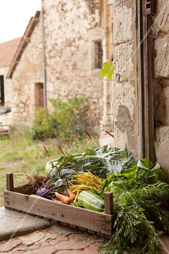 Frisch geerntetes Gemüse in einer Holzkiste in der Tür